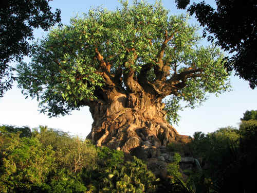 Evening sun on the Tree of Life
