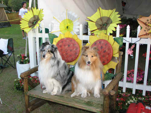 Gorgeous dogs at the Disney Horticulture tent.