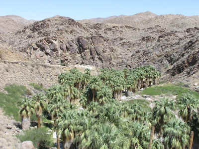 Palm Canyon - from lush palms to arid desert in just a few feet