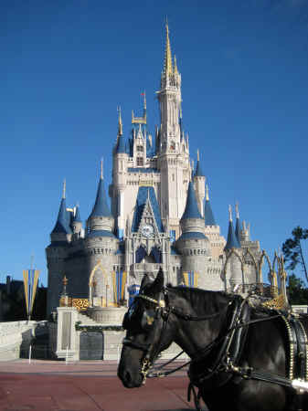 The castle on our last day - and the horse which took us up Main Street USA