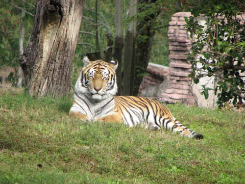 Lots of tigers on the Maharajah Jungle Trek