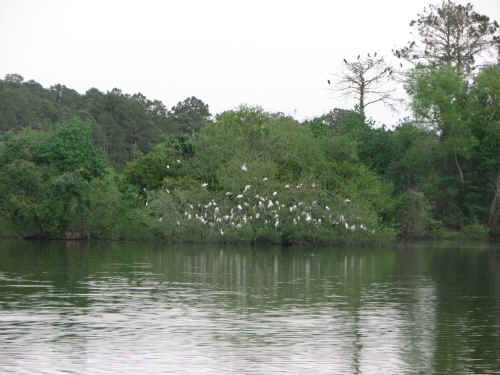 It's a pretty campground - egrets roost in the trees each night.