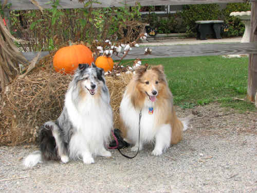 Zoe & Zak are getting excited about Halloween!